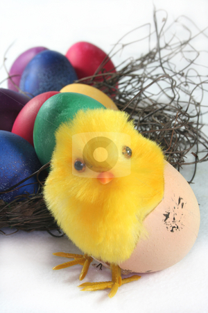 Easter Chicks stock photo, Easter chicks with nest and eggs by Simone Voigt