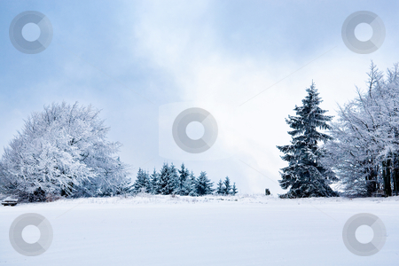 Winter forest  stock photo, The winter forest scene. Snowy landscape. by Val Thoermer