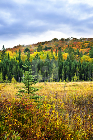 Fall forest stock photo, Fall forest with colorful trees and new saplings by Elena Elisseeva
