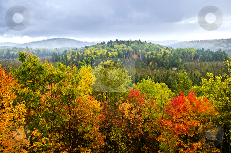 Fall forest stock photo, High view of fall forest with colorful trees by Elena Elisseeva