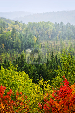 Fall forest rain storm stock photo, High view of fall forest with colorful trees in rain storm by Elena Elisseeva