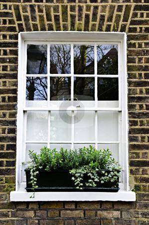 Window in London stock photo, Window with plant box in brick wall London by Elena Elisseeva