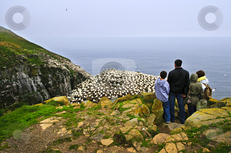 Family visiting Cape St. Mary's Ecological Bird Sanctuary in Newfoundland stock photo, Family watching northern gannets at Cape St. Mary's Ecological Bird Sanctuary in Newfoundland, Canada by Elena Elisseeva