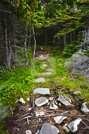 Forest path stock photo, Rough forest hiking trail in Newfoundland Canada by Elena Elisseeva