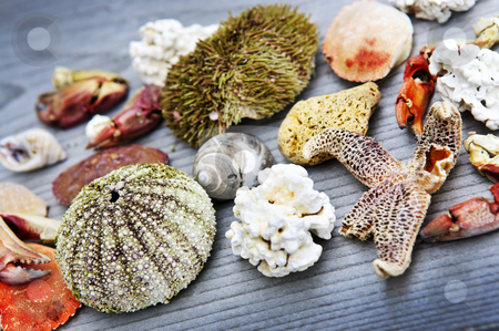 Sea treasures stock photo, Different types of marine life from Atlantic ocean in Newfoundland, Canada by Elena Elisseeva