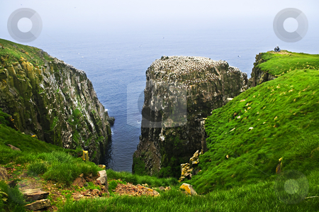 Clilffs at Cape St. Mary's Ecological Bird Sanctuary stock photo, Tourists at cliffs of Cape St. Mary's Ecological Bird Sanctuary in Newfoundland by Elena Elisseeva