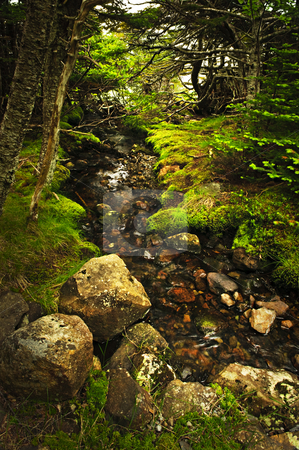 Forest creek stock photo, Small stream among fresh green summer forest in Newfoundland by Elena Elisseeva