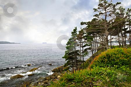 Atlantic coast in Newfoundland stock photo, Scenic coastal view of rocky Atlantic shore with trees in Newfoundland, Canada by Elena Elisseeva