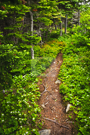 Forest path stock photo, Hiking trail in a sunlit forest in Newfoundland by Elena Elisseeva