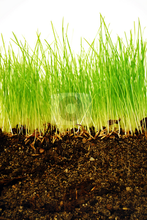 Earth and grass stock photo, Growing grass with roots in earth in close-up by Tudor Antonel adrian
