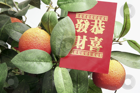 Tangerine Plant with Red Packet stock photo, Close Up of Tangerine Plant with Red Packet by Lai Leng Yiap