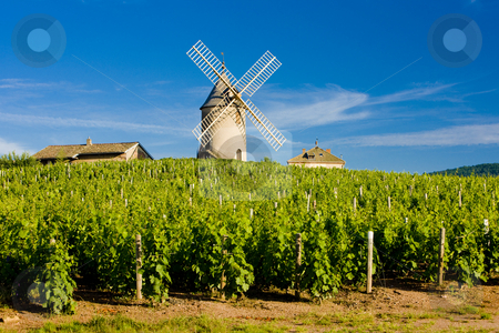 Chenas, Beaujolais, Burgundy, France stock photo, Vineyards with windmill near Chenas, Beaujolais, Burgundy, France by Richard Semik