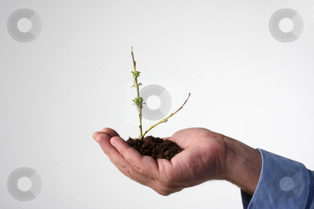 Environment protection stock photo, A tiny little tree starting to bloom in human hand, leafs just appearing by Johann Helgason