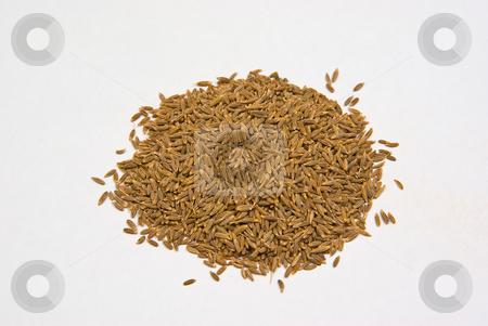 Kreuzk?mmel, Cumin (Cuminum cyminum) stock photo, Kreuzk?mmel (Cuminum cyminum), auch Mutterk?mmel, wei?er K?mmel, r?mischer K?mmel, welscher K?mmel, Kumin oder Cumin  ist ein Gew?rz, das aus getrockneten Fr?chten eines asiatischen Doldenbl?tengew?chses  besteht. - Cumin (Cuminum cyminum), and sometimes spelled cummin) is a flowering plant in the family Apiaceae, native from the east Mediterranean to East India. by Wolfgang Heidasch