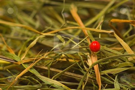 Nadel im Heuhaufen - Needle in a haystack stock photo, Deutsches Sprichwort by Wolfgang Heidasch