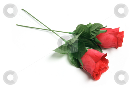 Red Roses stock photo, Red Roses on Isolated White Background by Lai Leng Yiap