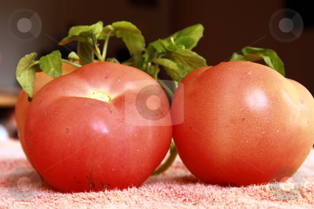 Two tomatoes. stock photo, Closeup of ripe tomatoes by Gowtum Bachoo