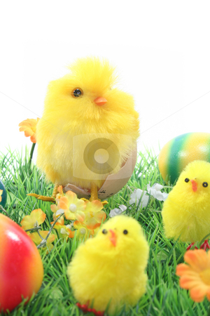 Easter eggs and chicks in a meadow stock photo, Chicks with Easter eggs on a flower meadow by Marén Wischnewski