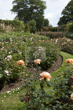 Rose garden stock photo, An English country rose garden in summer by Mark Bond