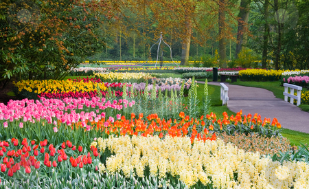 Lots of spring flowers in the park stock photo, Lots of spring flowers in the park on a sunny april day by Colette Planken-Kooij