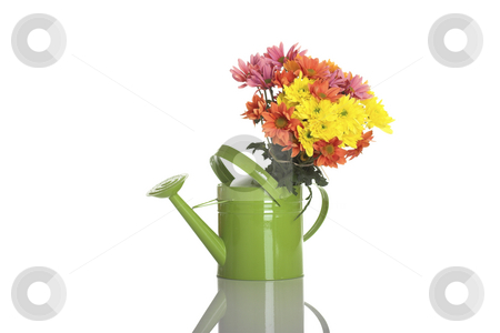 Green watering can with flowers stock photo, Green watering can with flowers isolated on white by ikostudio