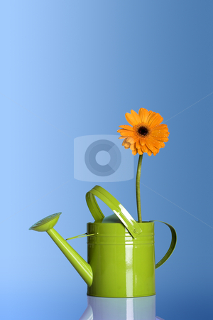 Watering can with a flower stock photo, Green watering can with a flower on a blue background by ikostudio