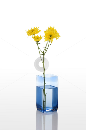 Yelow flower stock photo, A blue vase with a yellow flower isolated on white background by ikostudio