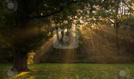 Sunrays through the trees in autumn stock photo, Sunrays through the trees on early autumn morning by Colette Planken-Kooij