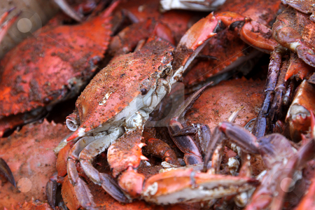 Hot and Dirty Crabs stock photo, A pile of hot and dirty crabs, covered in seasoning. by Chris Hill