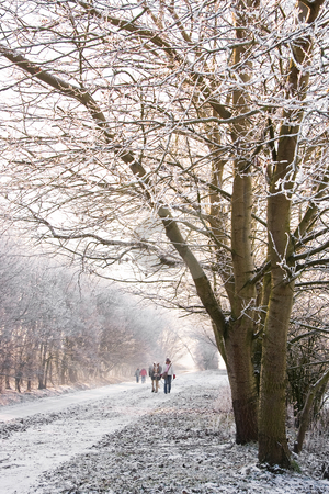 Snowy landscape stock photo, Walking in a silver and white snowy landscape by Colette Planken-Kooij