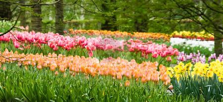 Springflowers in park