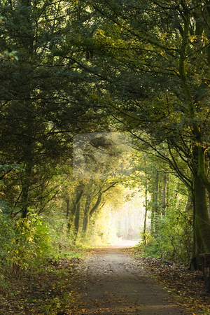 Forest path stock photo, Forest path in the early morning sun by Colette Planken-Kooij