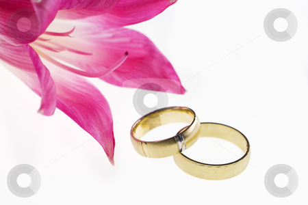 Two gold wedding bands beside a fresh red flower Closeup of wedding bands