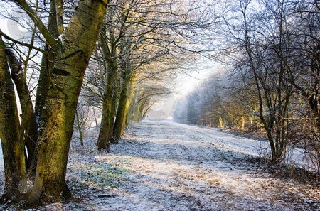 Snowy landscape stock photo, Beautiful colors and light in a white snowy landscape by Colette Planken-Kooij