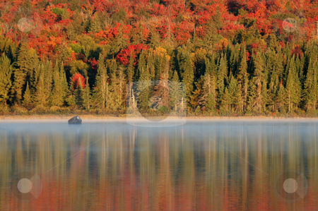 Algonquin Reflections stock photo, The early morning light shining on the beautiful autumn colors reflecting on a lake of Algonquin Park in Ontario, Canada. by Chris Hill