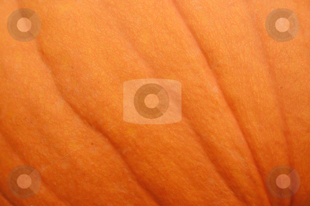 Pumpkin Background stock photo, A close uo image of a Pumpkin for a Background by Jim Mills