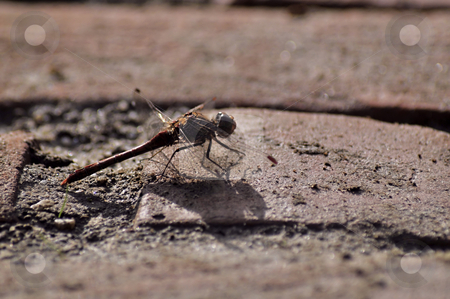 Insect stock photo, Insect resting on the ground, on a hot summer day by Olivia Neacsu