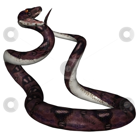 Snake stock photo, 3D rendered snake on white background isloated by Patrik Ruzic