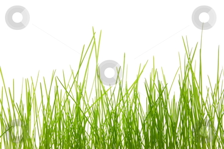 Grass stock photo, Green summer grass isolated on white background by Gunnar Pippel