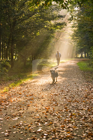 Man and dog stock photo, A man and his dog walking in the forest on a sunny and misty autumn morning by Colette Planken-Kooij