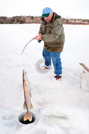 Man Pulling a Big Pike From Under the Ice stock photo, A man is pulling a huge pike from under the ice. by Denis Pepin