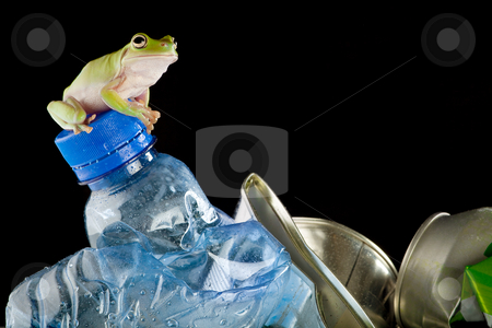 Eco frog stock photo, Ecology or environment image of a White's Green Tree Frog on garbage by Anneke