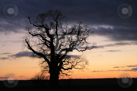 Lonely tree stock photo, Spooky scene. a lonely tree against the dramatic sky during the evening by Jan Remisiewicz