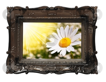 Summer flowers stock photo, Summer daisy flowers on a sunny day by Gunnar Pippel