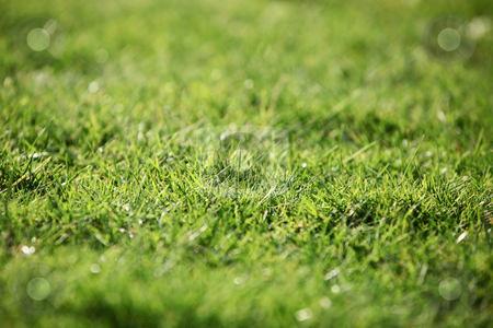 Green lawn - background texture stock photo, Green lawn - background texture by Christine Langer-Pueschel