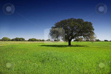 Green meadow stock photo, Green landscape with trees and  a beautiful blue sky by ikostudio