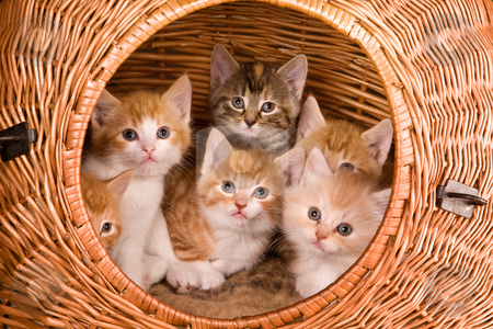 Six in a basket stock photo, Family of six kittens in their own basket by Anneke