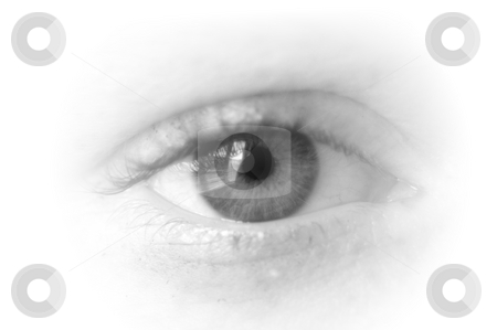 Eye stock photo, Eye isolated on white background is watching you by Gunnar Pippel
