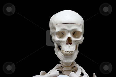 Skull stock photo, Closeup of the skull of a skeleton model isolated on black by P?