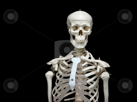Skeleton stock photo, White skeleton model isolated on black background by P?